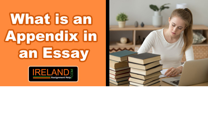 What is an Appendix in an Essay