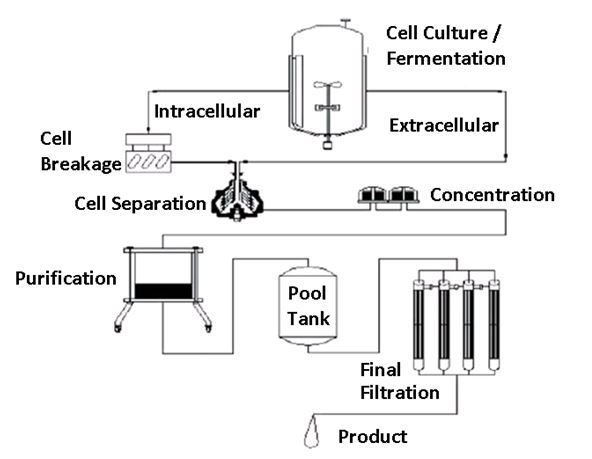 Study the following diagram that represents the basic unit operations that most companies implement when manufacturing a biopharmaceutical protein-based drug substance